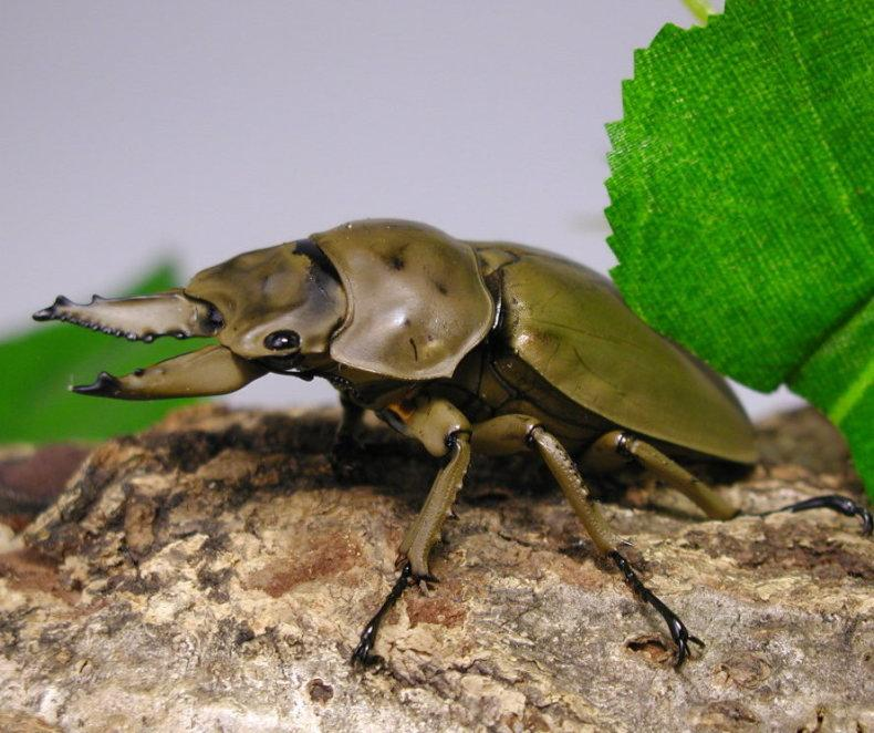 http://www.e-kuwa.com/05zukan/images/271-1-t.jpg